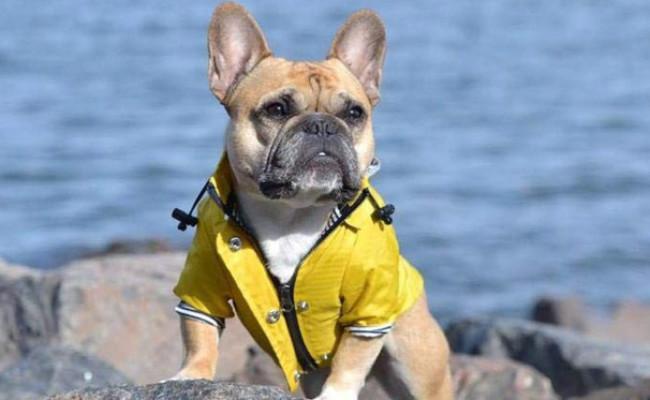 Ellie Dog Wear Zip Up Raincoat
