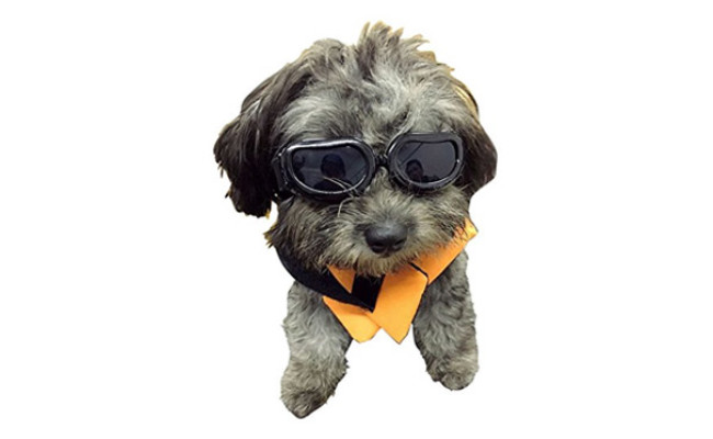 Enjoying Dog Goggles