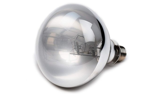 Evergreen Pet Supplies UVB Bulb For Bearded Dragon