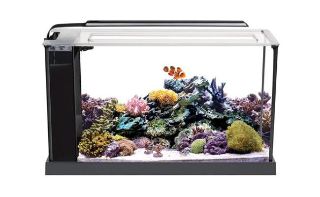 Fluval Evo V Marine Nano Reef Tank