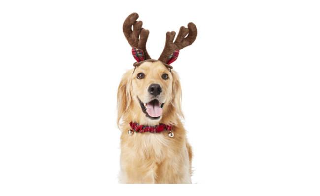 Frisco Holiday Antler Headband & Bell Collar Dog Costume