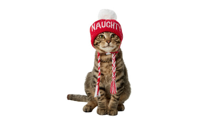 Frisco Naughty/Nice Cat Knitted Hat
