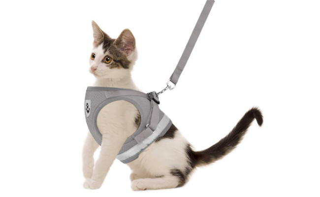 GAUTERF Cat Universal Harness