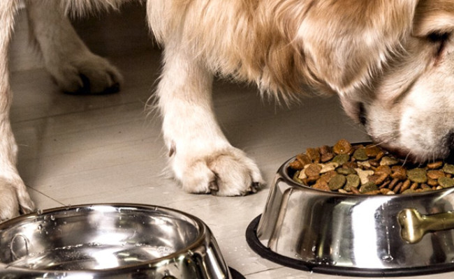 GPET Stainless Steel Dog Bowl