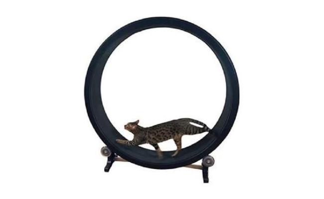 Generic cat Climbing Frame