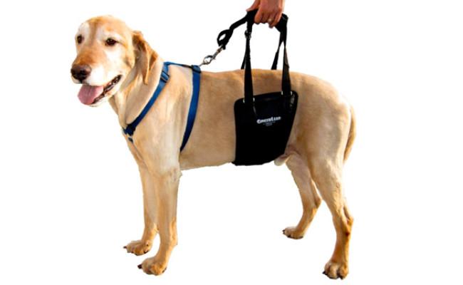 GingerLead Dog Support & Lift Harnesses