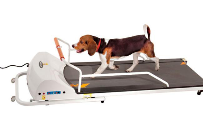 GoPet PR720F Dog Treadmill