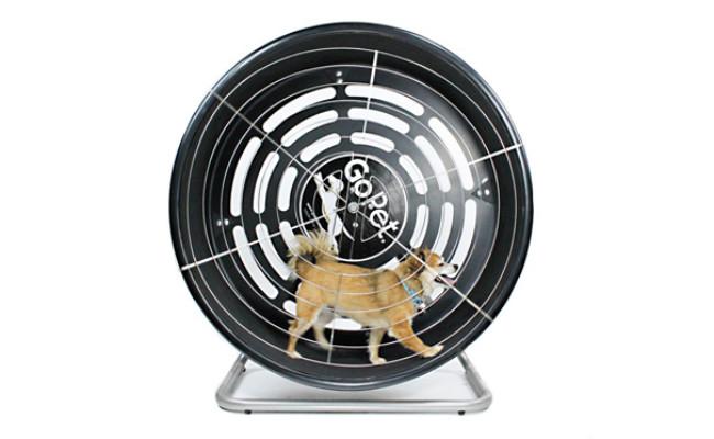 GoPet Treadwheel ToySmall