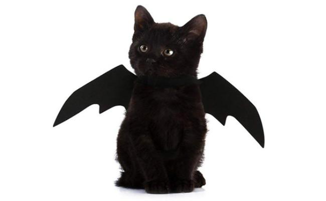 Halloween Pet Bat Wings