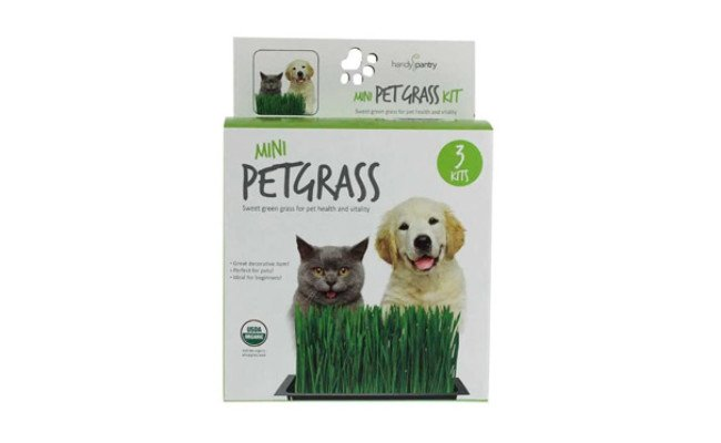 Handy Pantry Organic Cat Grass Kit