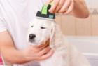 HappyDogz Pet Shedding Brush