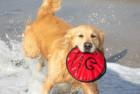 Hyper Pet Dog Frisbee Toy
