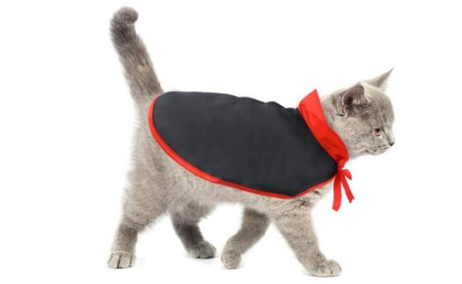 Idepet Cat Halloween Costume Cloak