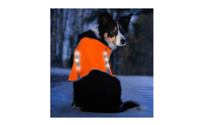 Illumiseen LED Dog Vest