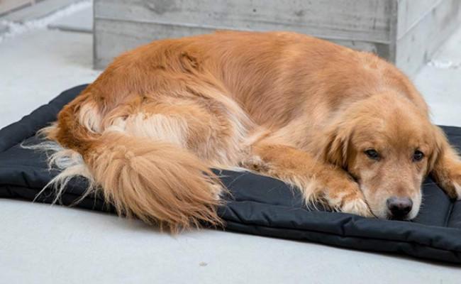 K9 Ballistics Indestructible Dog Bed