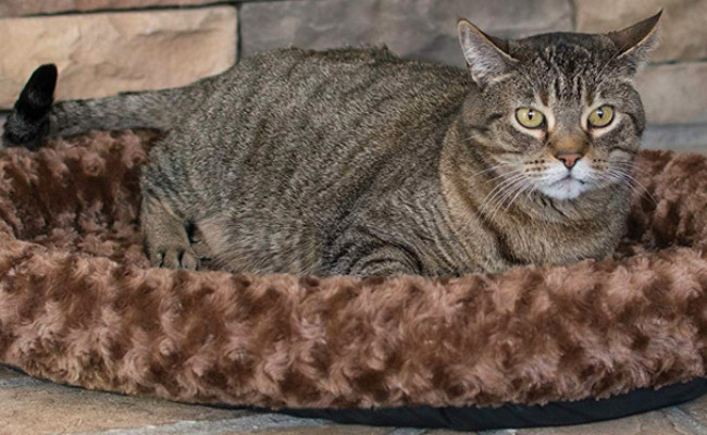 K&H Pet Products Thermo-Kitty Splash Heated Cat Bed