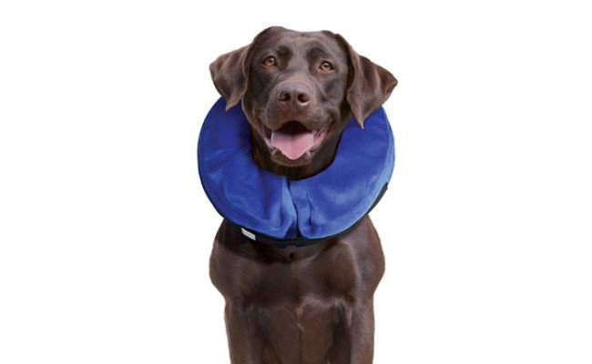 KONG Cloud E-Collar for Dogs