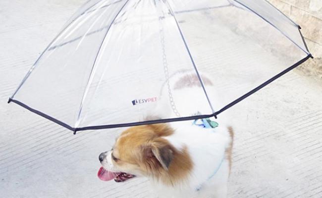 LESYPET Pet Umbrella with Leash