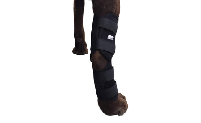 Labra Dog Knee Braces