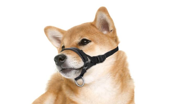 Lepark Nylon Dog Muzzle for Dog