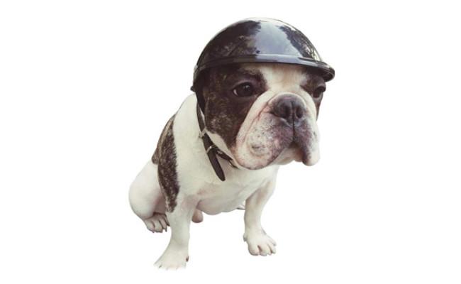 Lifeunion Doggie Motorcycle Helmet