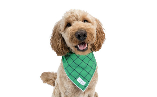 Lucy & Co. Dog Bandana