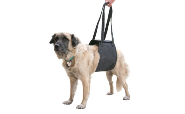 Max and Neo Dog Lift Support and Rehab Harness