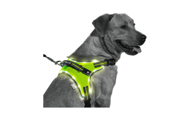MelonTaiL Light Up Dog Harness
