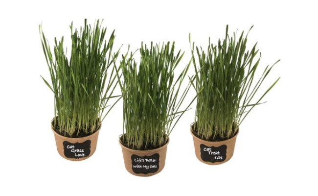 Microgreen Pros Organic Cat Grass
