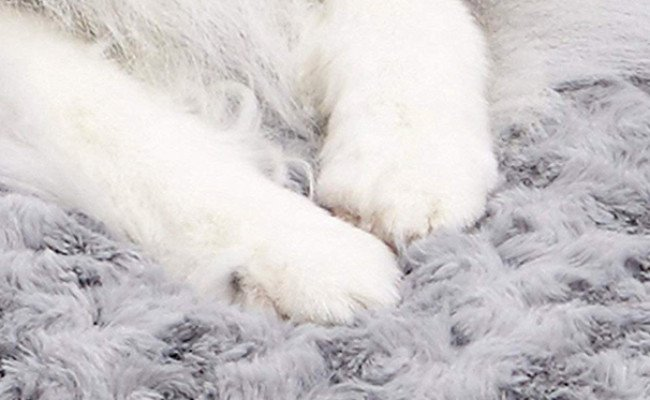 MidWest Homes for Pets Washable Dog Bed