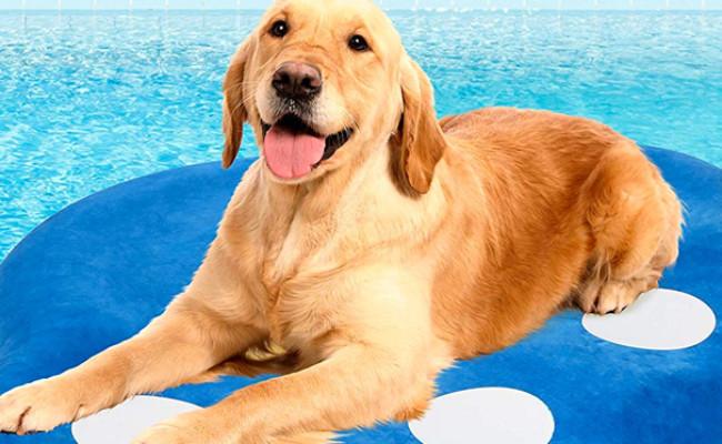 Milliard Dog Pool Float