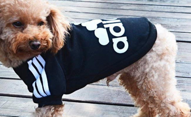 Moolecole Adidog Dog Sweater