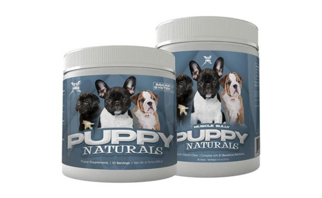 Muscle Bully A Healthy Nutritional Formula for Growing Puppies