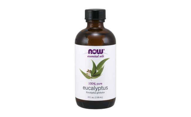 NOW Foods Eucalyptus Oil for Dogs