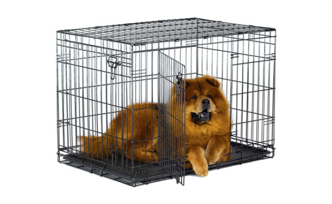 New World Pet Products Folding Metal Dog Crate