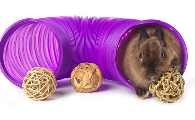 Niteangel Fun Tunnel for Chinchillas