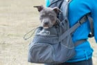 Outward Hound Motorcycle Dog Carrier