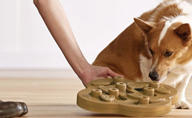 Owner gives her dog a puzzle toy
