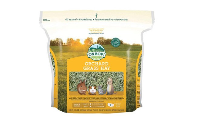 Oxbow Animal Health Orchard Grass Hay for Guinea Pigs