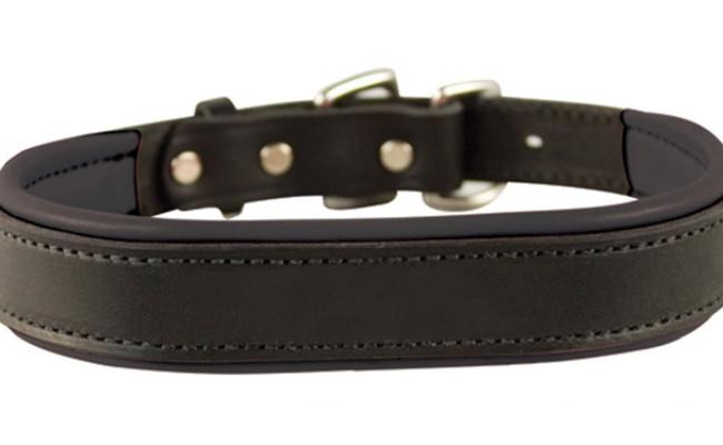 Perri's Padded Leather Dog Collars