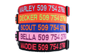 Personalized Dog Collar by GoTags