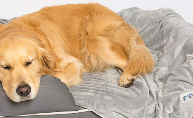 PetFusion Premium Dog Blanket