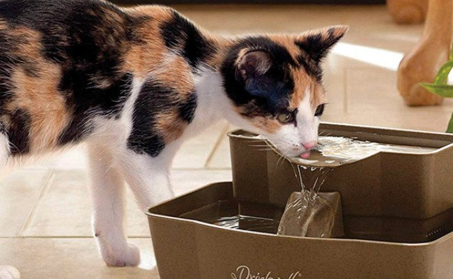 PetSafe Automatic Drinking Fountain for Cats