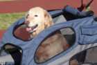 PetSafe HoundAbout Dog Bike Trailer