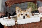 PetSafe Tagalong Dog Basket for Bikes