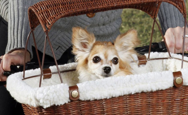 PetSafe Tagalong Dog Basket for Bikes