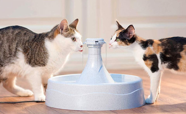 PetSafe Water Station for Cats