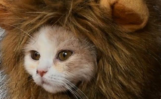 Rosylife Lion Mane Wig Cat Costume