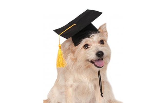 Rubie's Black Grad Dog Hat