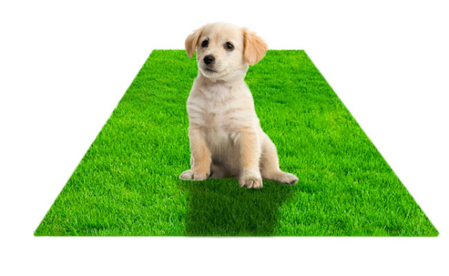 STARROAD-TIM Artificial Grass Rug for Dogs Potty Training